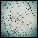 instagram shot of birds